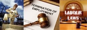 employment lawyers in toronto